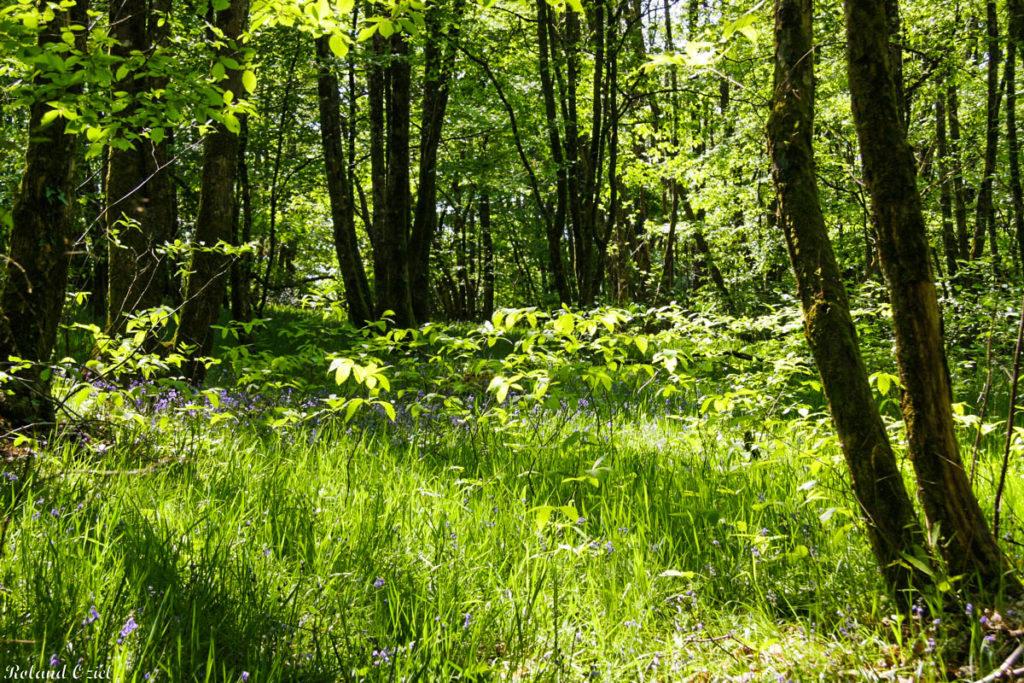Forêt de Mervent