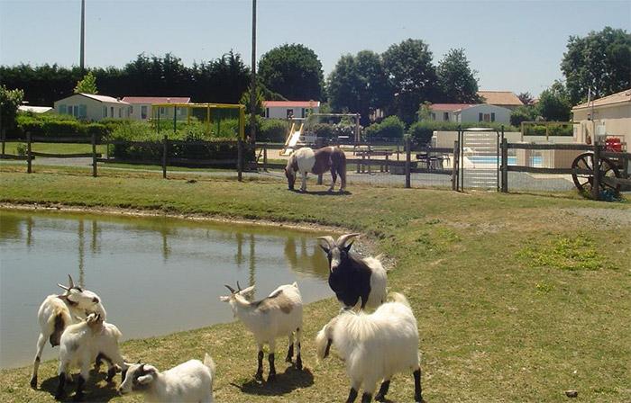 vacances en camping à taille humaine avec animaux près du Puy du Fou en Vendée